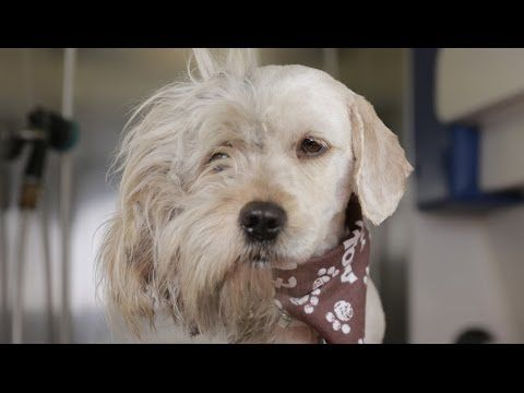 Homeless Dog Gets Makeover That Saves His Life! - Charlie - http://dailyfunnypets.com/videos/dogs/homeless-dog-gets-makeover-that-saves-his-life-charlie/ - Charlie the Shelter Dog was found on the side of the road and brought to an L.A. Area Shelter Subscribe to The Pet Collective:  Website:  Facebook:... - (animal), adopted, adoption, dog, dogs, homeless, makeover, pets, rescue, rescues, shelter, tra, transformation