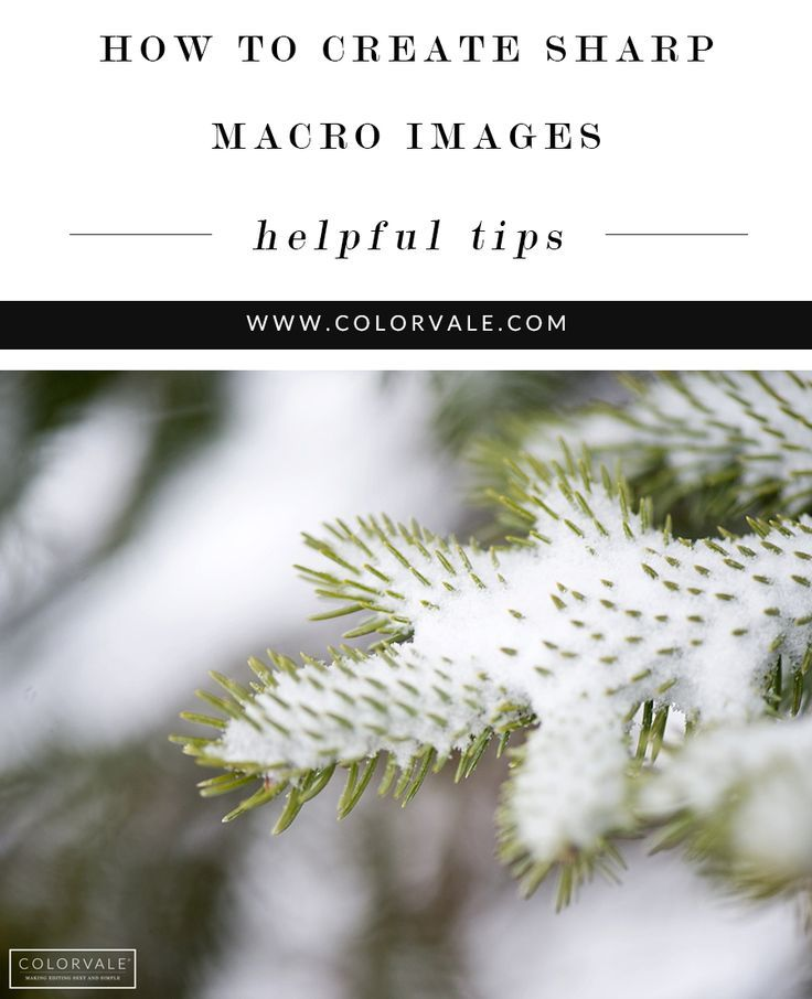 How to Create Sharp Macro Images - Use these tips to create sharp macro images every time Read how here - http://www.colorvaleactions.com/blog/how-to-create-sharp-detail-photographs/