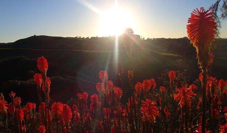 Sunrise at Bushy Park, Wanganui, NZ
