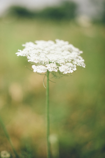 Queen Anne's Lace Style Me Pretty | Gallery