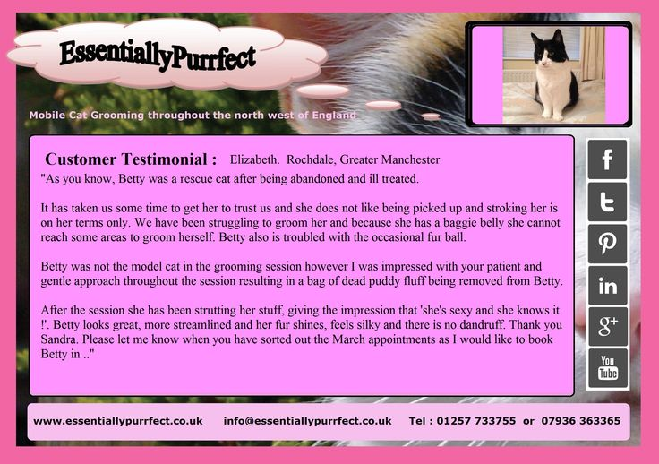 Customer Testimonial of EssentiallyPurrfect #mobile #cat #catgrooming service. Elizabeth #Rochdale #Manchester