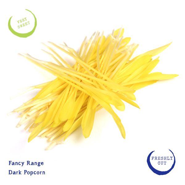 Dark Popcorn microgreens. A sunny yellow. Intensely sweet! http://corsica.co.za/