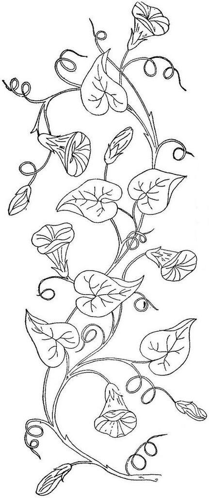 Morning Glory Vine Stencils : Best images about cp borders doodles patterns etc