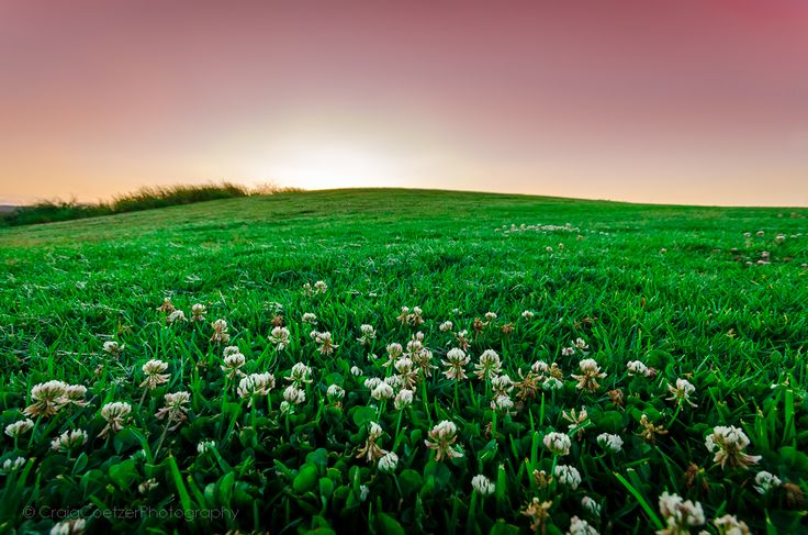 Nature's Bouquet - This is a picture of a rolling hill and small flowers in the foreground with a beautiful sunset behind. This photo was taken in Johannesburg, South Africa on the 15th of Nov 2011.  EXIF data (1/15 sec at f9.0, ISO 100) at 10mm