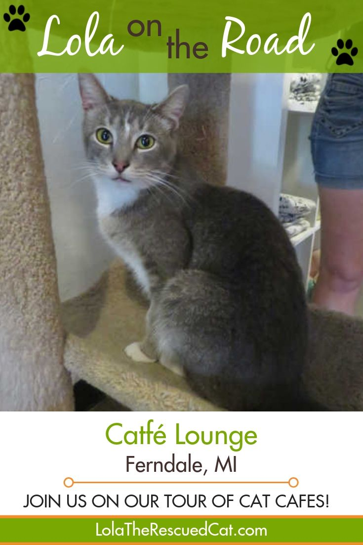 Lola On The Road Catfe Lounge Ferndale Mi Cat Cafe Therapy Cat Cat Hug