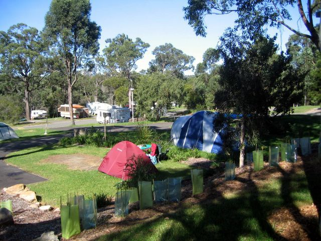 Area for tents and camping at Lane Cove River Tourist Park, NSW