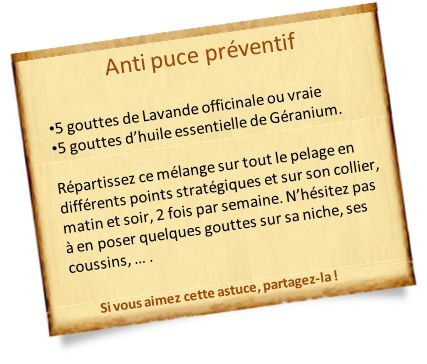 anti puce naturel preventif