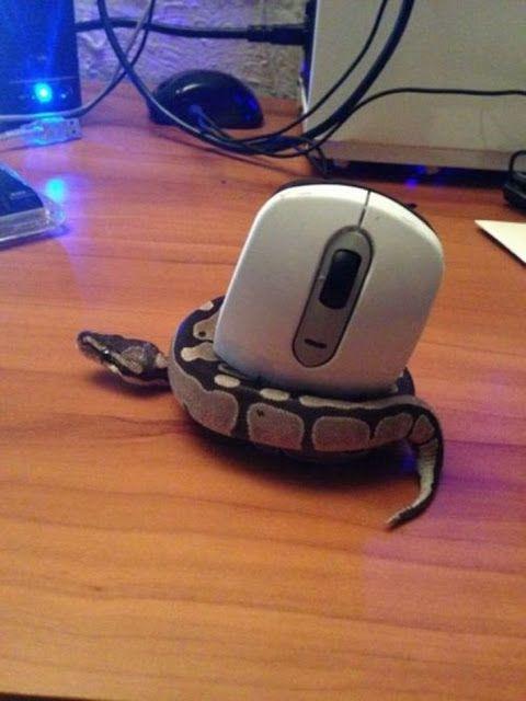 Tanto Alguma Coisa: 11 animais completamente confusos com a tecnologia...