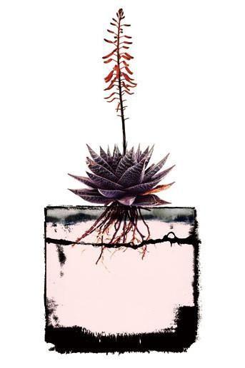 Grafik Botanical 6
