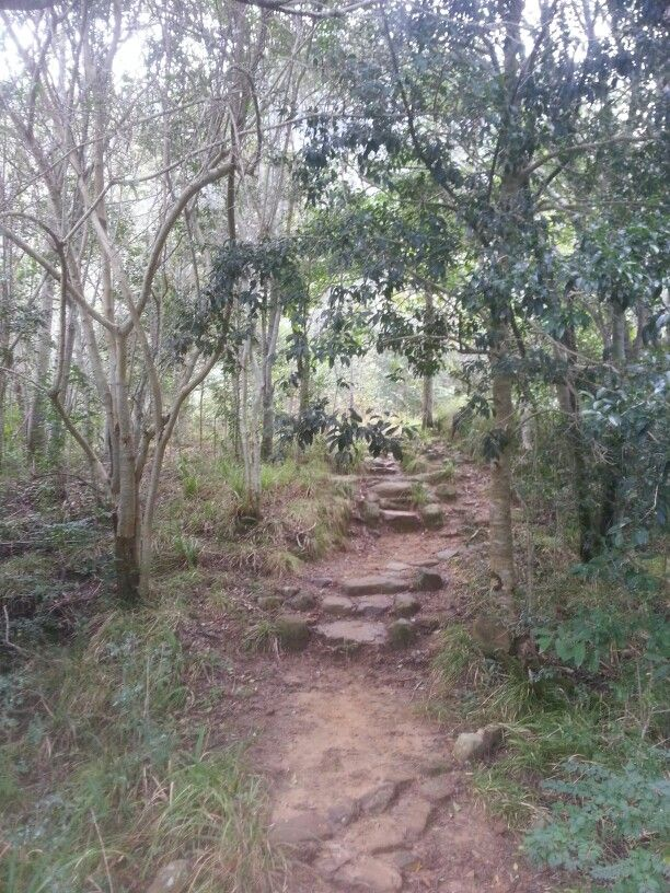 Forest Steps, Newlands Forest, Cape Town