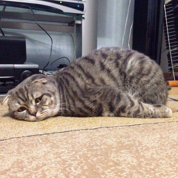 Mas obviamente eles sentem falta de seu planeta natal. | 19 fotos que mostram que os gatos não são deste mundo