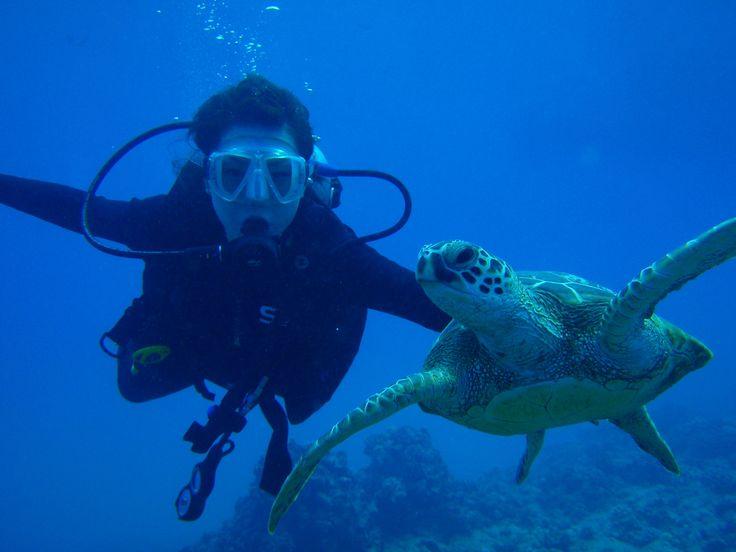 scuba dive images   Hawaii Scuba Diving, PADI Dive certification, Honolulu Scuba Lessons