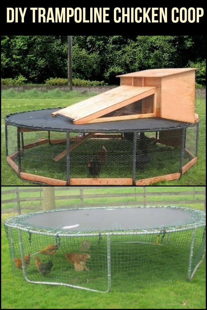 Are you looking for an easy-to-make chicken coop? Make use of a trampoline!