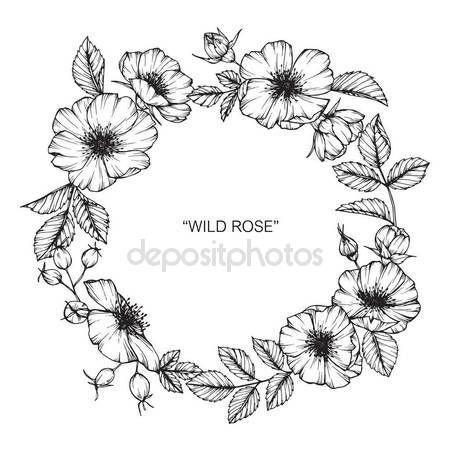 Descargar - Marco de flor color de rosa salvaje dibujo. Dibujo y dibujo con línea blanco y negro-arte — Ilustración de Stock #169910946