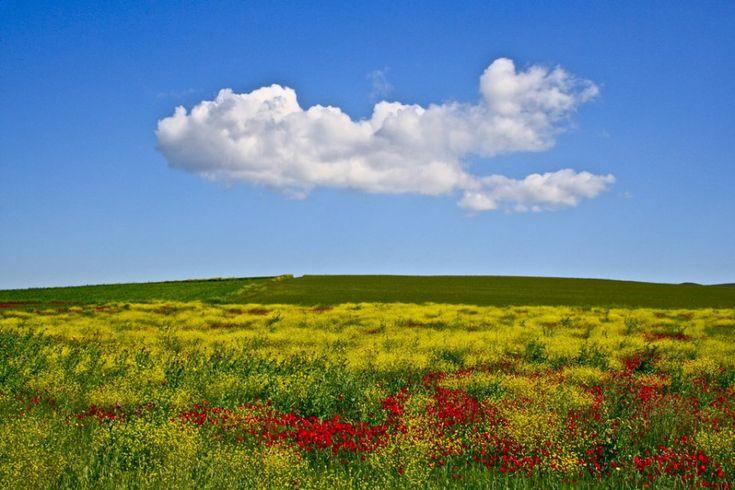 Τα χρώματα του Θεσσαλικού κάμπου μέσα από 17 φωτογραφίες