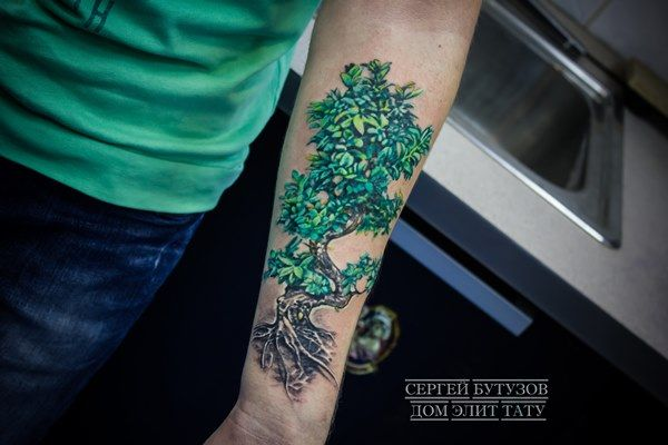 Татуировка с изображением дерева бонсай в стиле реализм