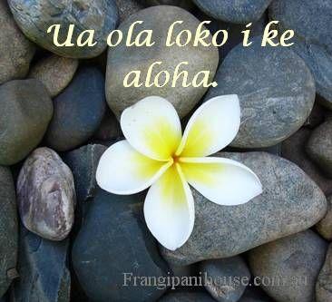 ua ola loko i ke aloha - Love gives life within