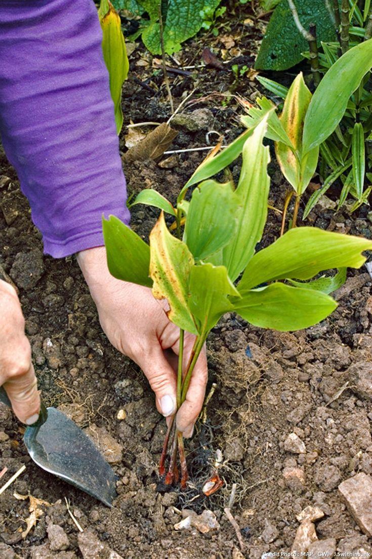 Les 123 meilleures images du tableau les bons gestes du for Conseil du jardinier
