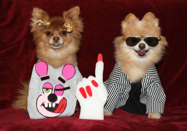 100 Genius Pet Costumes for Halloween via Brit + Co.