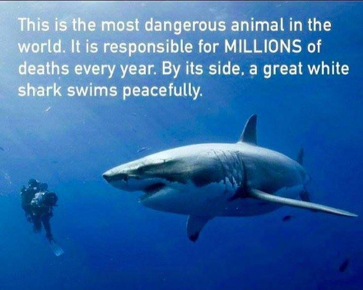 Best Marine Conservation Images On   Marine
