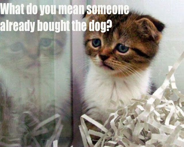 Cute Kitten is sad because the dog was picked before him ...