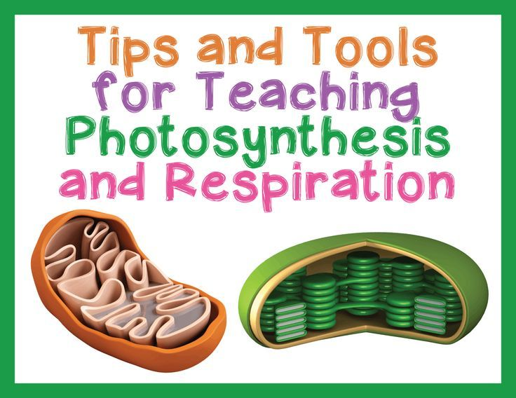 Tips and Tools for Teaching Photosynthesis and Respiration in High School Biology - Science and Math with Mrs. Lau  www.electricturtles.com/collections