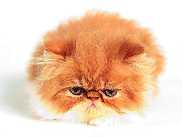 feral cat program of georgia