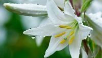 Fondos de Flores Blancas Para Fondo De Pantalla En Alta Definición 22