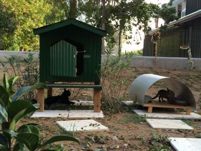 12 cats are living now at the area of Sheraton Adana Hotel and hotel's park defending guests of hotel from rodents and other pests, coming from the Seyhan River. Cats have a daily ration, as well as the benefits package, which includes a vet. Also, cats are literally surrounded by the love of the hotel staff and guests.