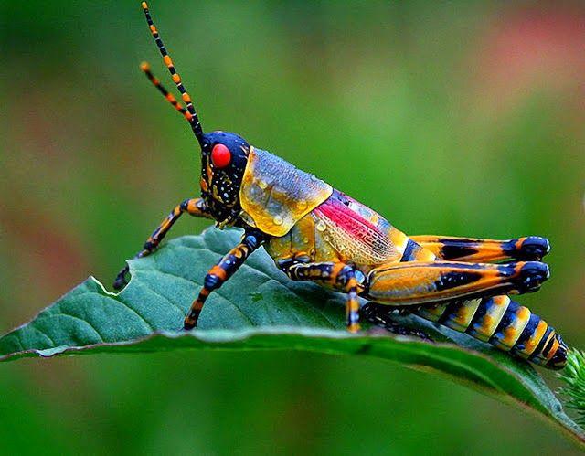10 impresionantes macro fotografias de insectos. | Quiero más diseño