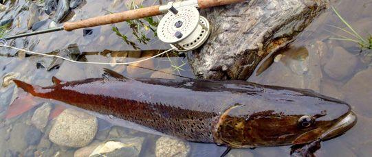 Beste Ausrüstung für Fliegenfischer und traditionelle Bogenschützen - Fly Fishing Tours - CORCON Craft