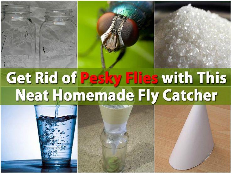 13 best images about keep flies away on pinterest flies away apple cider vinegar and keep. Black Bedroom Furniture Sets. Home Design Ideas