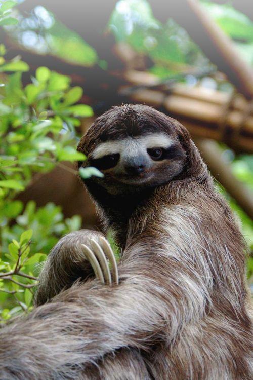 29 best Sloths... imag...