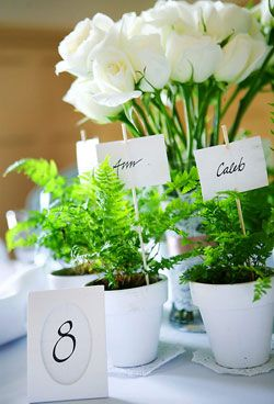potted plants keep your event eco-friendly