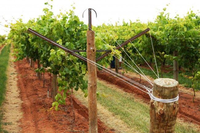 HappyModern.RU | Руководство по созданию шпалеры для винограда своими руками (47 фото) | http://happymodern.ru