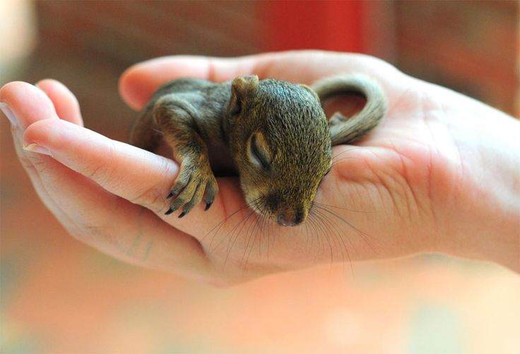 baby squirrel!!! I would love love love to have one eventually. maybe when i am an old woman but at somepoint