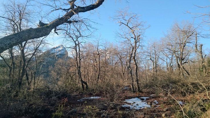 Bosques de montaña de nothofagus oblicua en invierno