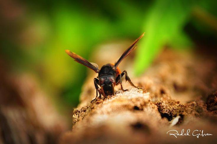 BEE by Radek Gibran