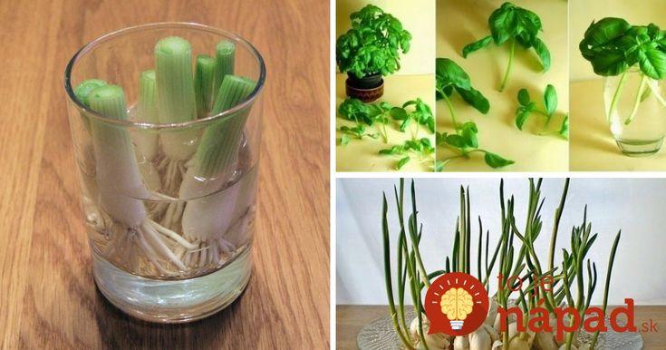 Vypestujte si domáce plodiny zo zvyškov. Úrodu čerstvých potravín môžete mať pokojne aj niekoľkokrát do roka!