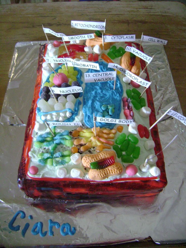 Edible 3D Cell Model Ideas | Dylan made an animal cell out of cake with fondant for the organelles.