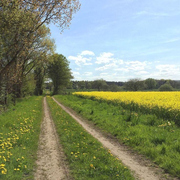 #steinhudermeer #steinhude #winzlar #naturpark #sonne #sun #nature #pinterest
