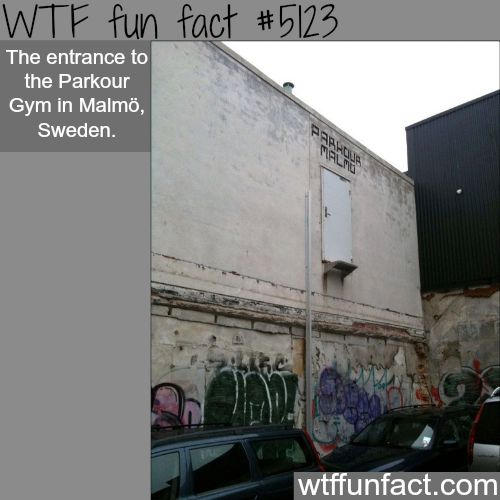 Parkour Gym in Malmo, Sweden - WTF fun facts