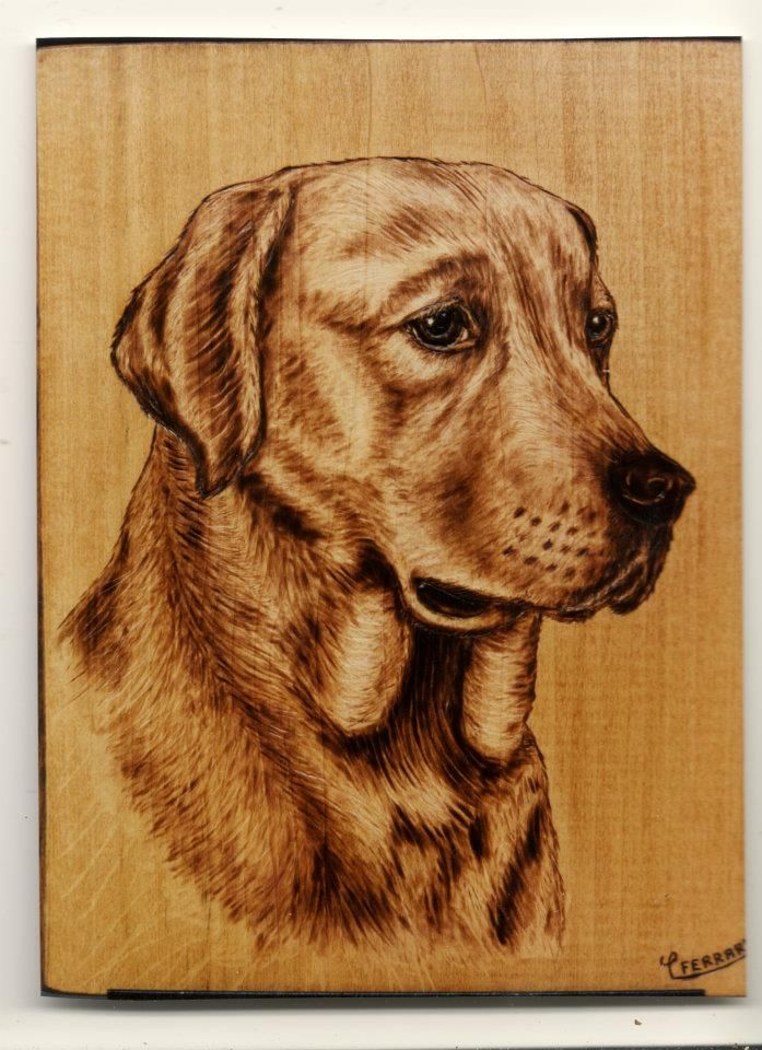 Labrador dog - Pyrography by CarloFerrario1954.deviantart.com on @DeviantArt
