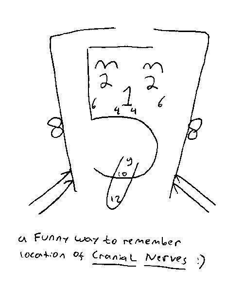 Best 25+ Cranial nerves mnemonic ideas on Pinterest