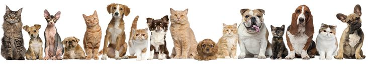 Check your dog or cat symptoms online | Web DVM