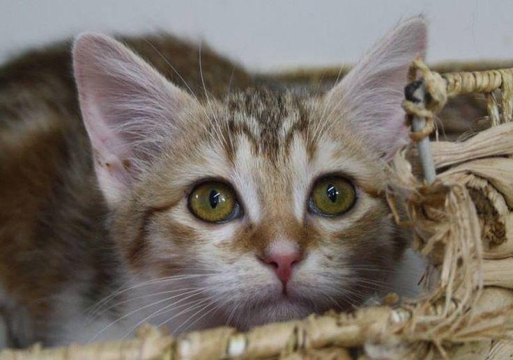 Portes Ouvertes pour l'adoption les 3 et 4 octobre prochains ! | Société Protectrice des Animaux