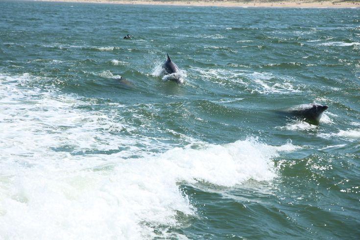 Dolphin Watching in Virginia Beach
