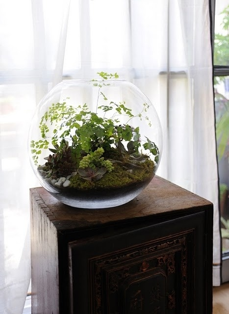 1000 images about terrarium inspiration on pinterest for Make your own fish tank
