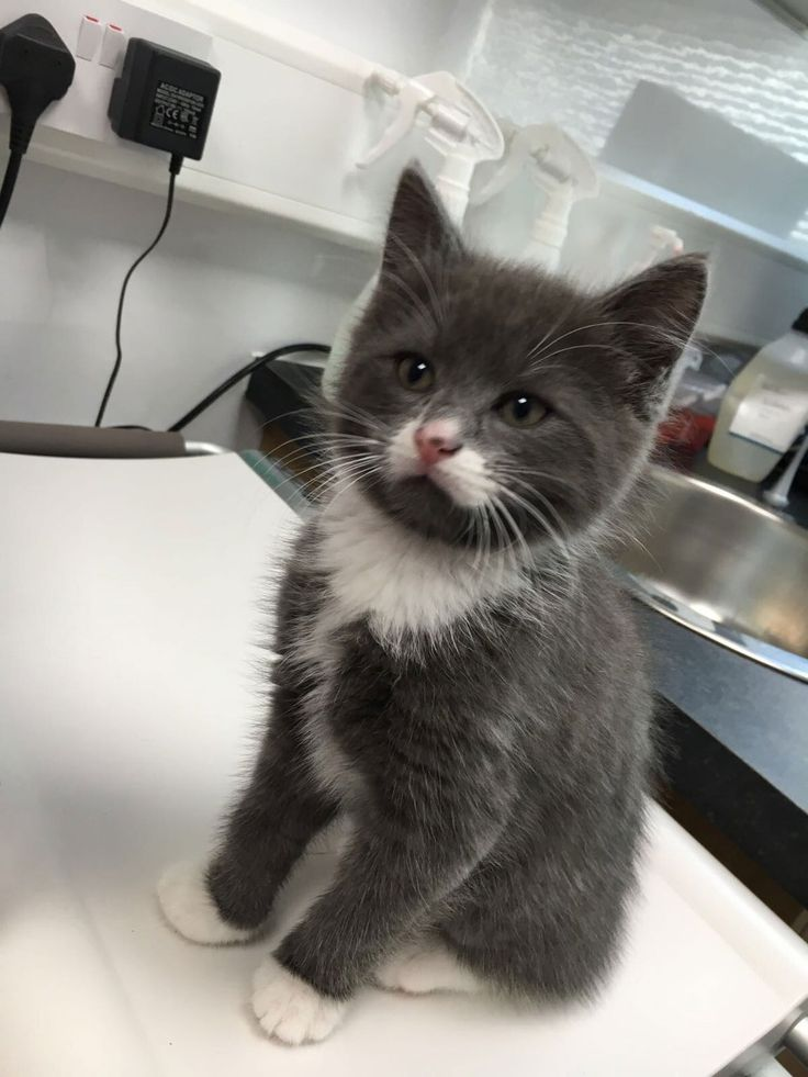 Bella the kitty's first visit to the vet
