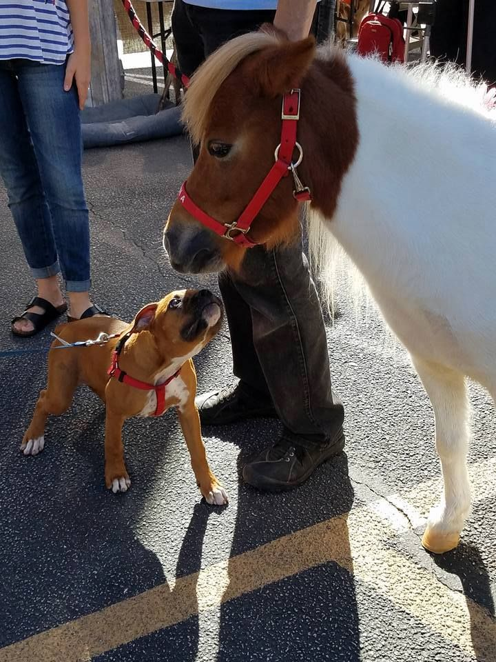 BFFs (Best Friends Furrever) - Blessing of the Animals at St. Austin Parish in October 2017.